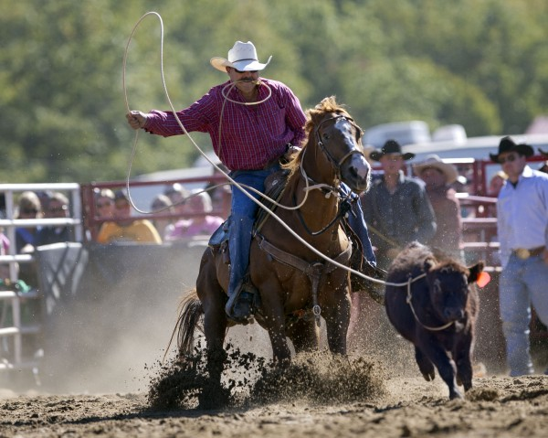 Carmine Nastri of Ballston, N.Y., lassoes a calf on his way to win the tie-down roping competition at the Cumberland County Fair, Saturday, Sept 28, 2013.