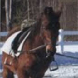 Allie, a 9-year-old Arabian horse, was last seen on Oct. 8 in the Bray Hill area in Phillips. The mare is mostly brown with a little white on its forehead. Anyone with information about the missing animal is asked to call 639-5936 or 684-4418.