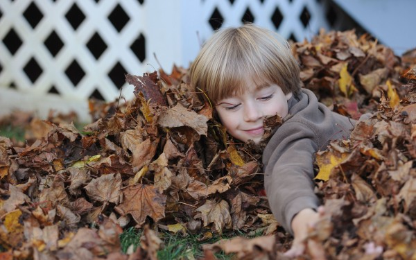Max Gatchell plays in the leaves that he raked together at his home in Brewer on Sunday.