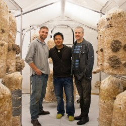 MATSUTAKE MUSHROOM BUSINESS OVER 20 YEARS!!!