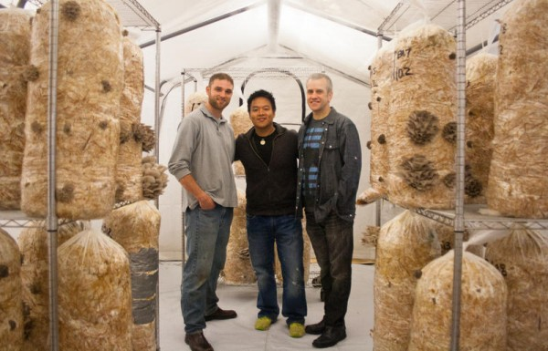 Devin Stehlin, left, Khanh Le and Scott Payson in a climate-controlled growing tent at Bountiful Mushrooms Farm in Portland. The farm now produces about 200 pounds a week of two varieties of oyster mushrooms.