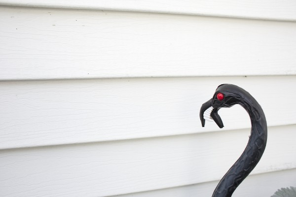 Amy Violette has a Halloween themed flamingo outside the front of her home in Bucksport.