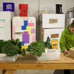 New market co-op aims to add variety, strengthen Portland's local food economy