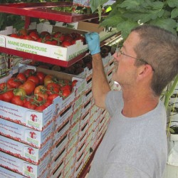 Backyard Farms faces delay in restart, furloughs employees