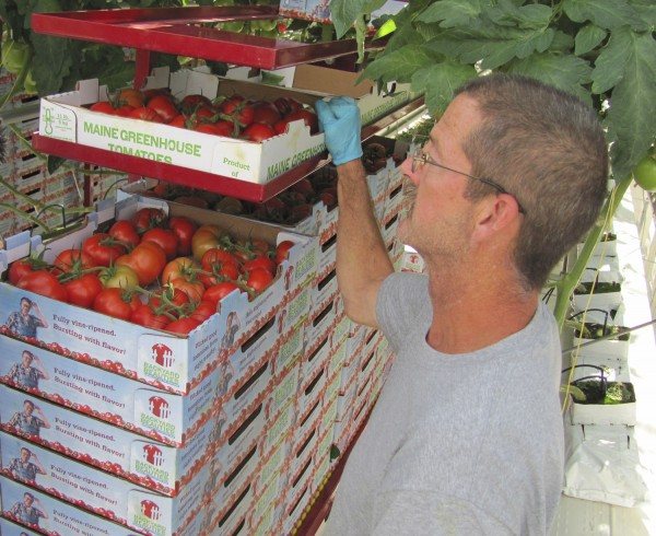 Backyard Farms employee John Duggan of Canaan transports cases of freshly picked &quotBackyard Beauties,&quot the farm's premiere product, in this 2009 file photo.
