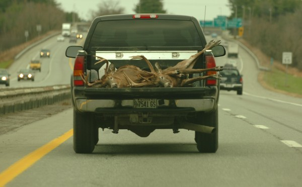 A pair of white-tailed deer lie in the back of a hunters truck as it rolls up Interstate 95 northbound from Bangor in this 2005 file photo.