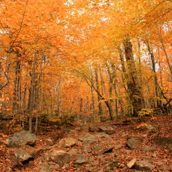 25 Fun Fall Things to Do