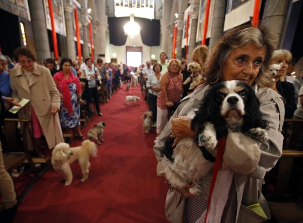 Owners and their pets attend a mass at the Saint Pierre D'Arene church to honour the feast of Saint Francis of Assisi in Nice, southeastern France, October 6, 2013. Saint Francis of Assisi is the patron saint of animals and the environment.