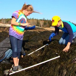 UM Machias students discover invasive crab in Beals which poses threat to Maine's shoreline ecosystem