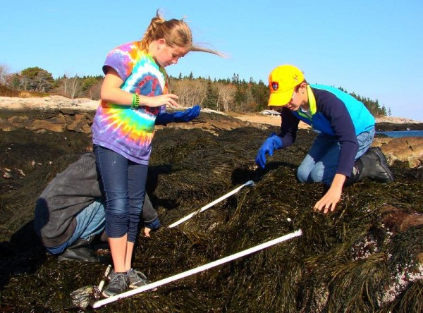 Bath Middle School students Emma Boynton, left, and Matthew Beard set up a square-meter study plot to hunt for European green crabs Monday, as part of an expeditionary learning trip at Reid State Park in Georgetown.