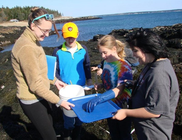 Becky Kolak of the Kennebec Estuary Land Trust, left, works with Bath Middle School students Matthew Beard, Emma Boynton and Abby Knowles to analyze a crab they found while combing Half Mile Beach.