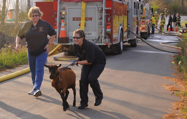 A first responder leads a goat to a pen during a fire on Sawyer Road in Levant.