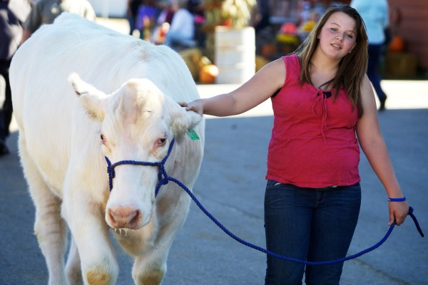 Lilly Crawford, 16, leads her 17-month-old shorthorn, Anderson, for a stroll around the grounds at the Fryeburg Fair on Tuesday. &quotI'm in 4-H, and I'll sell him for beef. It'll be tough to say goodbye, but this is my fifth cow,&quot said Crawford.