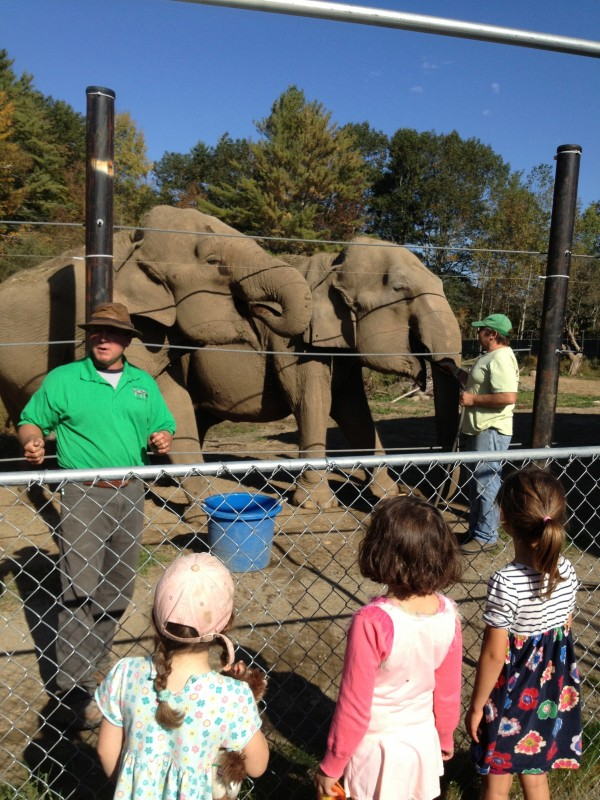 Morning Glory Garden students marvel at elephants.