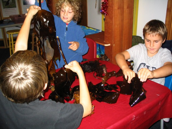 """Seaweed"""" taken by Felicity Bowditch : """"Children explore Kelp at the museum"""""""