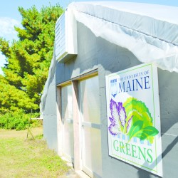 UMaine students enjoy home-grown greens