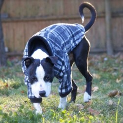 Dog apparel business expands to retail space in Brewer