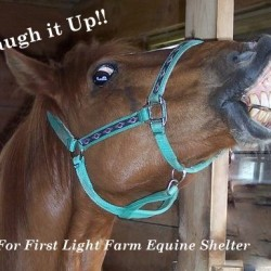 Comedy Night Fundraiser to benefit First Light Farm Equine Shelter, November 22 8PM -  at the Performing Arts Center, University of Maine Machias campus. Featuring the comedy of Rob Steen, Jay Grove and Tom Hayes.