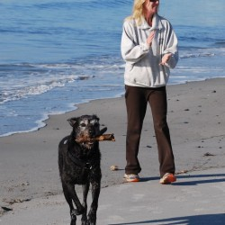 Saco discusses beach dog ban