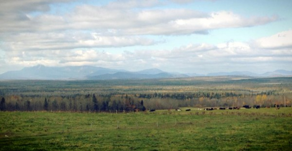 While driving north on I-95, Sarah Smiley came around a bend and saw the most spectacular sight: behind the cows and the orange and red autumn leaves, Mount Katahdin rose in the distance.