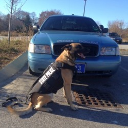 Bangor police dogs receive protective vests