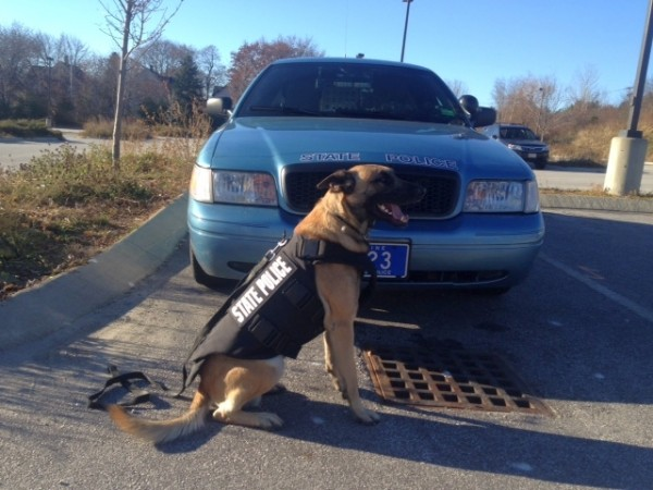 Winger, a 2½-year-old Belgian Malinois, wearing his new protective vest. Winger, a state police canine, patrols in Washington and Hancock counties with Trooper Christopher Smith.