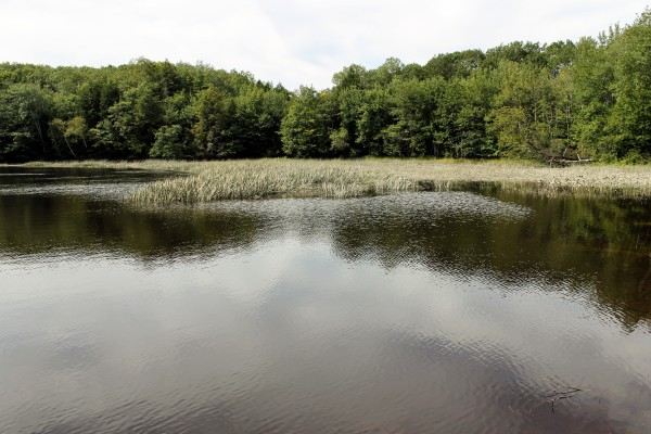 The Cathance River can be seen from a 29-acre parcel of land in Topsham that was recently acquired by the Brunswick-Topsham Land Trust to be conserved. The trust plans to build trails on the land in the future.