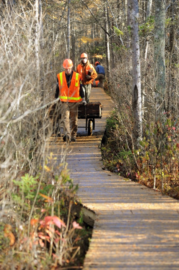 Members of Maine Conservation Corps remove rotten sections of the the Orono Bog Boardwalk on Saturday.
