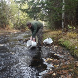 Machias woman donates more than 10 acres to salmon federation to be sold for its capital campaign
