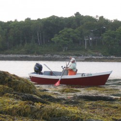 Rockweed harvesting: a recipe for sustainability
