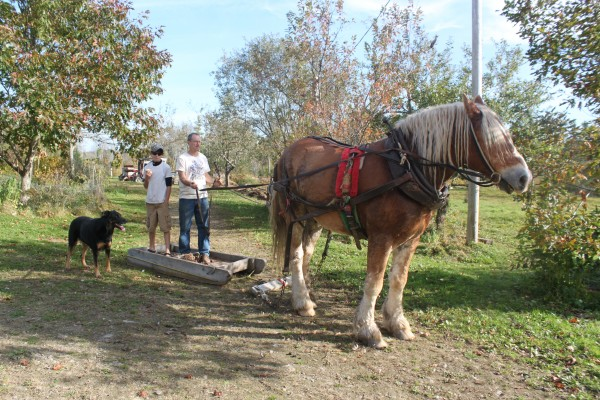 Fyn Kynd, 12, (left) and his father, Iam Kynd, stand on a wooden sled behind their Belgian work horse, Buddy, at their family farm, Kynd View Farm, in Searsmont, in October 2013. The horse transports heavy loads throughout the farm.