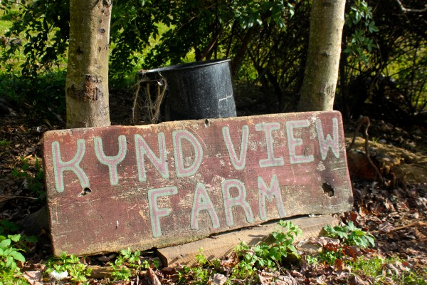 Kynd View Farm is a small family farm in Searsmont.