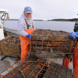 Selling scallops in the shell could boost fishermen's income