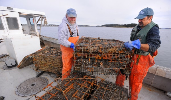 Stonington lobsterman Marsden Brewer (left) and Dana Morse of the University of Maine Marine Extension Team check the test cages used to grow scallops near Crotch Island off Stonington.