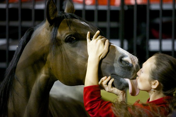 Animal trainer Gala Rogacheva has one of the horses for the Ringling Bros. and Barnum & Bailey Fully Charged tour do tricks Wednesday afternoon at the Cross Insurance Center.