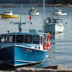 Maine lobster landings value jumped $23 million in 2013