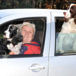 "Eugene sits on the lap of Kathy Campbell in the driveway of her Auburn home while her other two dogs, Murphy and Maus, right, look out the back window of her 2000 VW Golf, which has more than 226,400 miles on it. ""The back seat has only been in the upright position twice since I bought the car. When I am driving, they only sit in the back, where they are comfortable and not distracting me when I drive."""