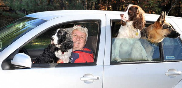 Eugene sits on the lap of Kathy Campbell in the driveway of her Auburn home while her other two dogs, Murphy and Maus, right, look out the back window of her 2000 VW Golf, which has more than 226,400 miles on it. &quotThe back seat has only been in the upright position twice since I bought the car. When I am driving, they only sit in the back, where they are comfortable and not distracting me when I drive.&quot