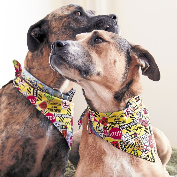 Photo courtesy of Dogn'i Apparel Apollo and Pheona show of their matching collars and bandannas made in  construction print by Dogn'i Apparel.