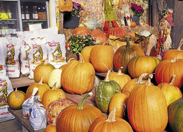 Among the produce sold at Calkins Farm Stand on Main Road South in Hampden are potatoes, pumpkins, and squash.