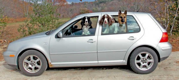 Kathy Campbell's 2000 VW Golf has 226,400 miles on the odometer, and three frequent passengers: Eugene, an 8-year-old black and white springer spaniel; Maus, the 5-year-old German shepherd; and Murphy, the 2-year-old liver and white springer spaniel.