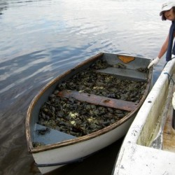 O'Chang Comics makes video detailing Maine's battle against invasive green crabs