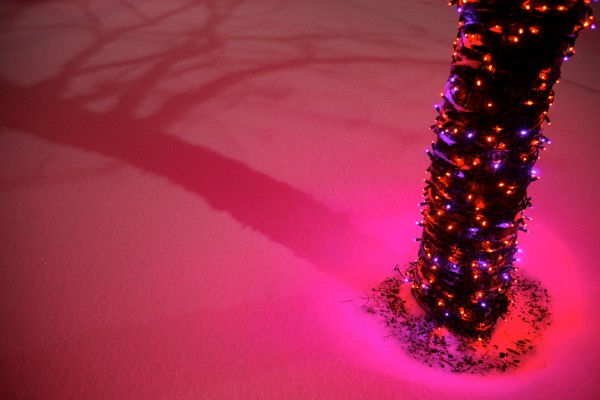 A tree, swathed in holiday lights, casts a glow on the new-fallen snow early Sunday morning in Portland's Longfellow Square.