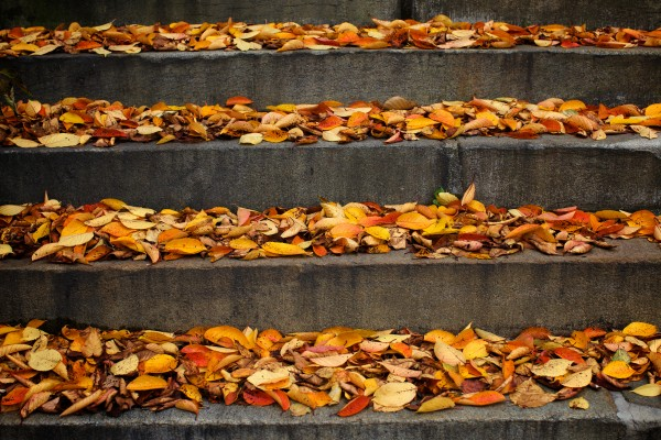Autumn leaves line the steps at the First Parish Church.