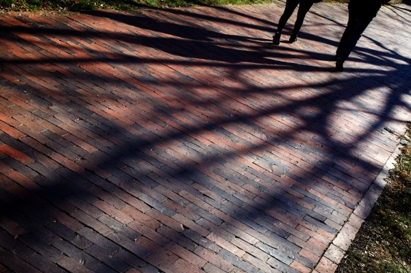 Pedestrian shadows mingle with those of a tree on State Street.