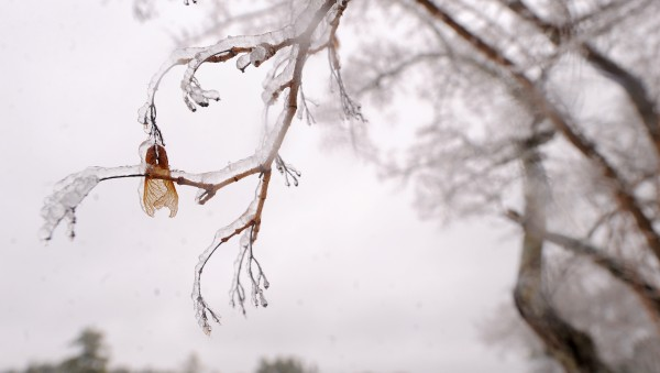 Ice accumulated on trees as heavy, freezing rain fell Monday morning in Bangor.