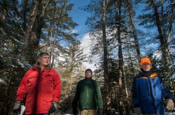 Robert Shafto, left, Scott Lindsay and Rene Noel survey the trees at Woods Road Community Forest in Falmouth for an upcoming forestry project to create wintering habitat for deer, as is required through a 1987 agreement with the Maine Department of Environmental Protection. Shafto is Falmouth's open space ombudsman, Lindsay is a wildlife biologist with the Maine Department of Inland Fisheries and Wildlife, and Noel is owner of Southern Maine Forestry Services.