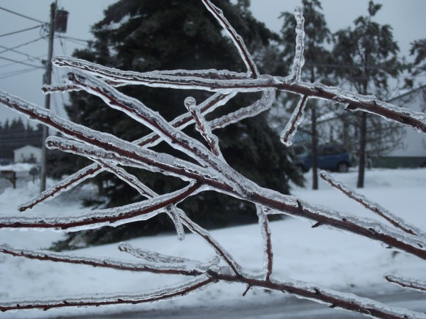 Branches are coated with a thick layer of ice on a tree in the yard of a Machias home on Sunday morning.