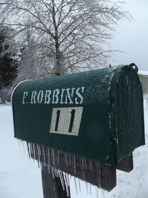 Icicles cling to a mailbox with an ice-coated tree in the background in a Machias neighborhood Sunday morning.