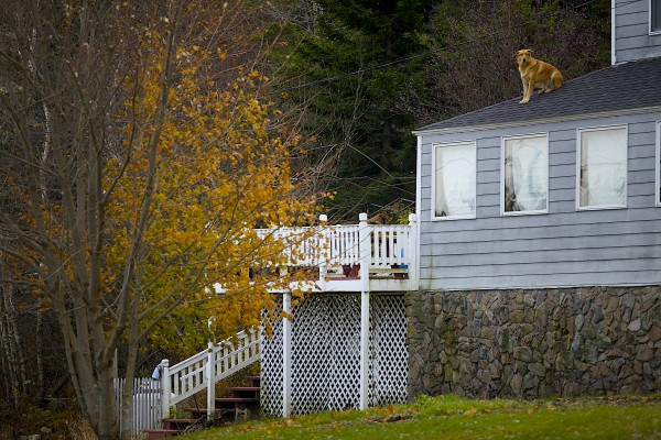 A dog sits on a roof looking out over the Wonsqueak Harbor near the exit of Acadia National Park on the Schoodic Peninsula Nov. 17.